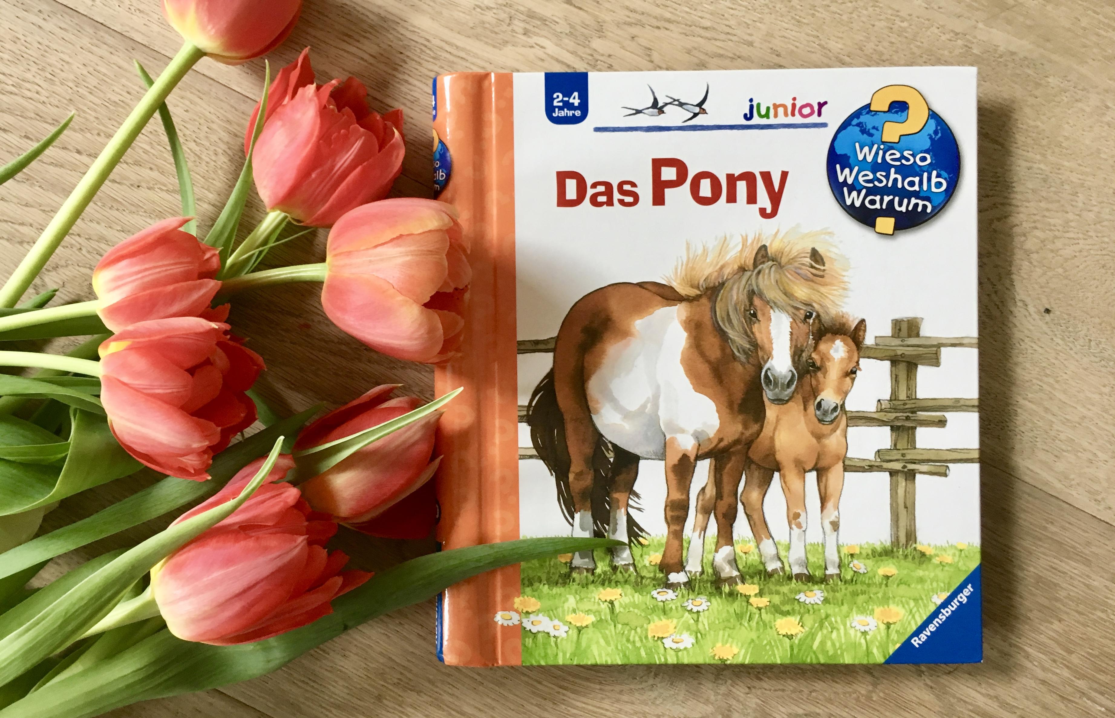 'Das Pony' aus der Reihe 'Wieso? Weshalb? Warum? junior' von Thea Roß